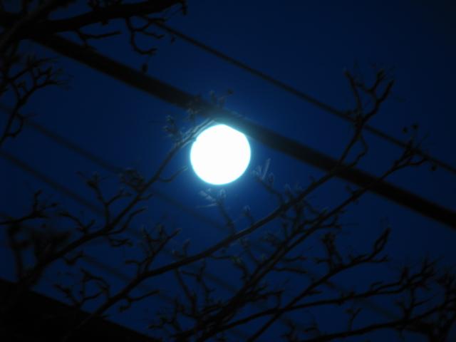 Wolf Moon - January 2010